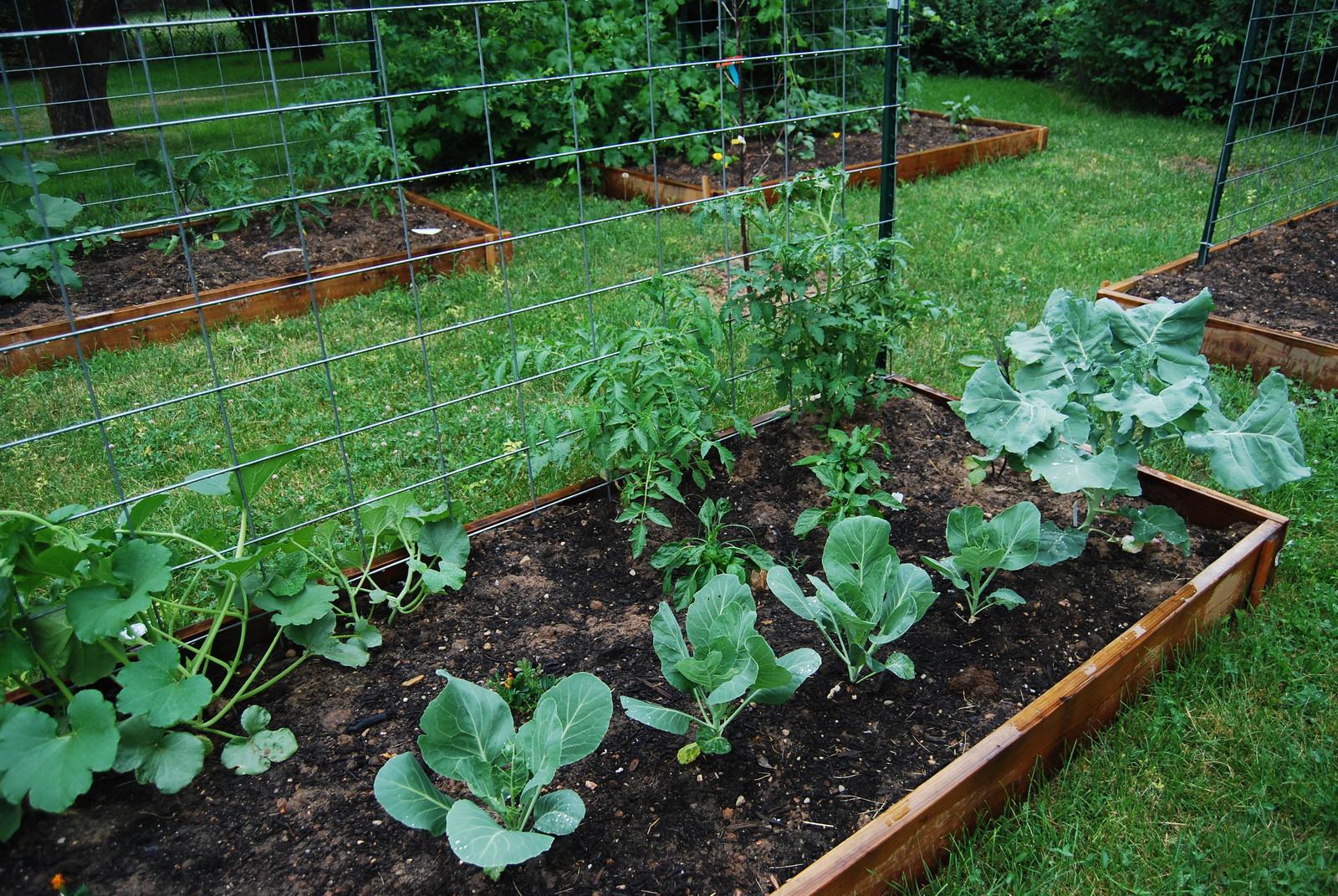 community garden offers independence  botany major